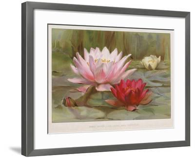 Hardy Water Lilies--Framed Giclee Print