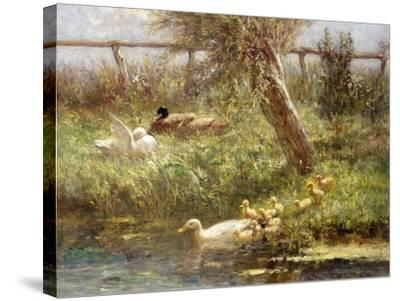 Ducks and Ducklings-David Adolph Constant Artz-Stretched Canvas Print