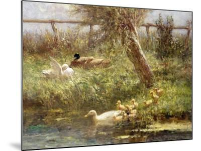 Ducks and Ducklings-David Adolph Constant Artz-Mounted Giclee Print