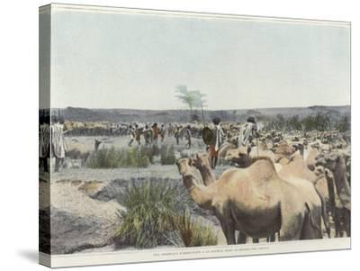 Watering the Camels at the Source in the Desert--Stretched Canvas Print