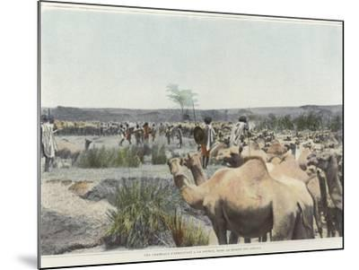 Watering the Camels at the Source in the Desert--Mounted Photographic Print