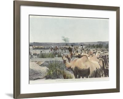 Watering the Camels at the Source in the Desert--Framed Photographic Print