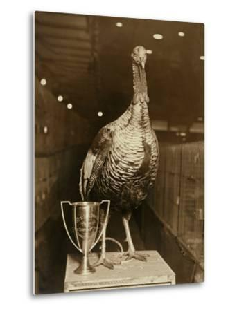 The Grand Champion Gobbler of the World--Metal Print