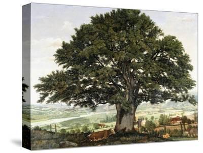 La Plaine D'Annecy-Chene Le Veterant Des Alpes-Jean Jacques Rousseau-Stretched Canvas Print