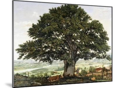 La Plaine D'Annecy-Chene Le Veterant Des Alpes-Jean Jacques Rousseau-Mounted Giclee Print