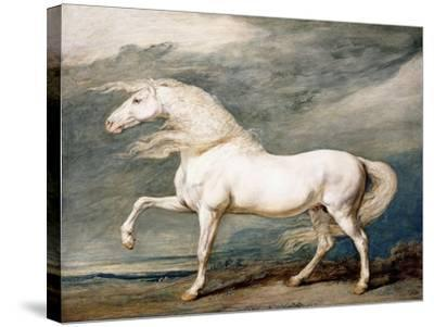 Adonis, King George III's Favourite Charger-James Ward-Stretched Canvas Print