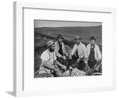 Dividing Sea-Birds' Eggs, Flamborough Head--Framed Photographic Print