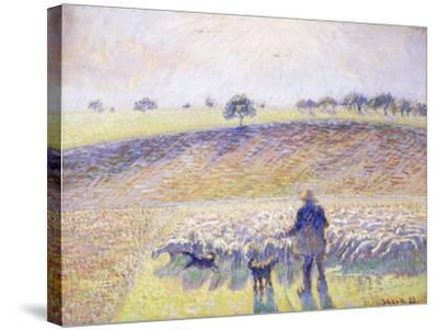 Shepherd with Sheep, 1888-Camille Pissarro-Stretched Canvas Print
