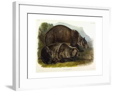 Male Grizzly Bear, 1848-John Woodhouse Audubon-Framed Giclee Print