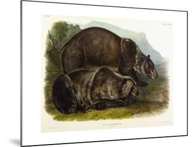 Male Grizzly Bear, 1848-John Woodhouse Audubon-Mounted Giclee Print