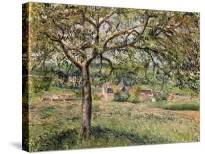 Apple Tree in Eragny, 1884-Camille Pissarro-Stretched Canvas Print