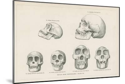 Skulls from Photographs--Mounted Giclee Print