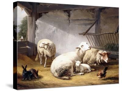 Sheep, Rabbits and a Chicken in a Barn, 1859-Eugene Joseph Verboeckhoven-Stretched Canvas Print