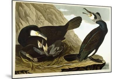 Common Cormorant, 1835-John James Audubon-Mounted Giclee Print