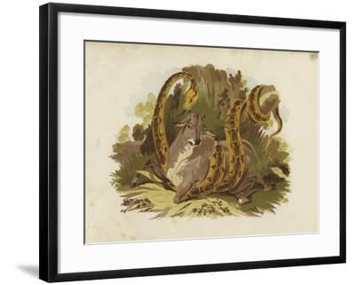 Cow Being Squeezed by Serpent--Framed Giclee Print