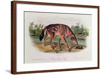 Red Wolf from 'Quadrupeds of North America', 1842-45-John Woodhouse Audubon-Framed Giclee Print