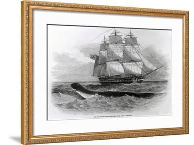 The Great Sea-Serpent When First Seen from H.M.S. Daedalus--Framed Giclee Print