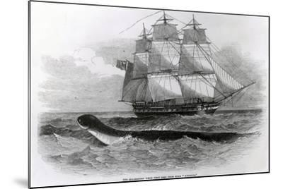 The Great Sea-Serpent When First Seen from H.M.S. Daedalus--Mounted Giclee Print
