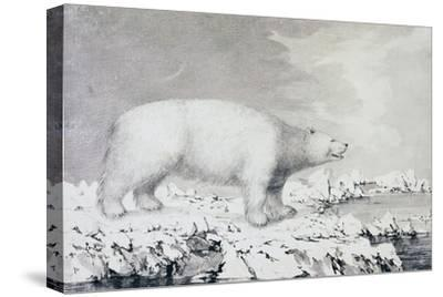 White Bear--Stretched Canvas Print