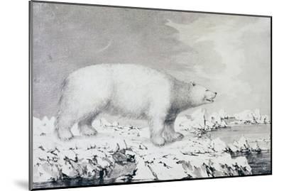 White Bear--Mounted Giclee Print