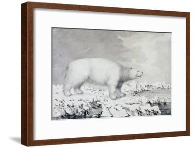 White Bear--Framed Giclee Print