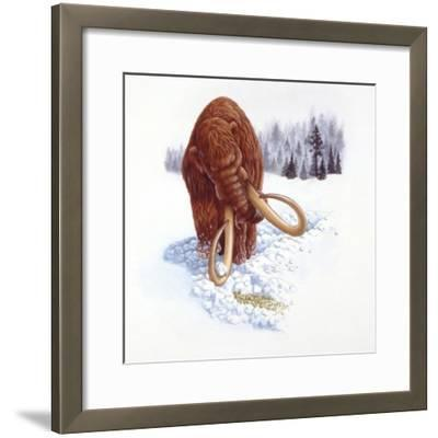 Mammoth Searching for Food in Snow--Framed Giclee Print