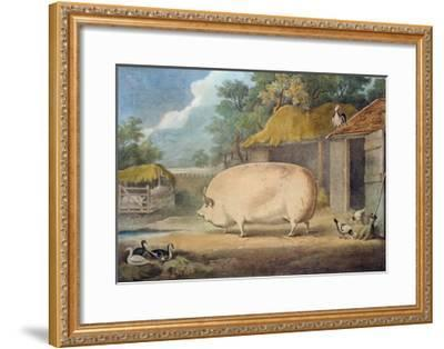 A Leicester Sow, 2 Years Old, the Property of Samuel Wiley-William Henry Davis-Framed Giclee Print