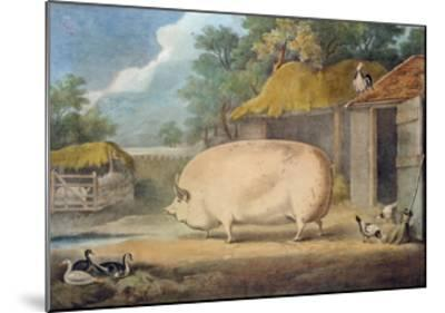 A Leicester Sow, 2 Years Old, the Property of Samuel Wiley-William Henry Davis-Mounted Giclee Print