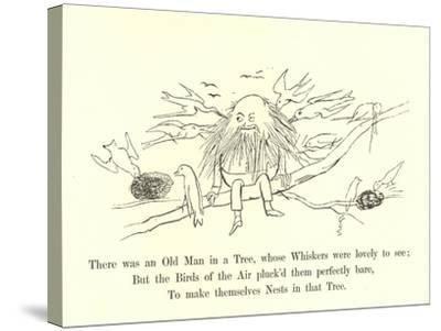 There Was an Old Man in a Tree, Whose Whiskers Were Lovely to See-Edward Lear-Stretched Canvas Print