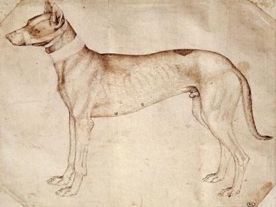 Study of Hunt Dog-Antonio Pisano-Framed Giclee Print