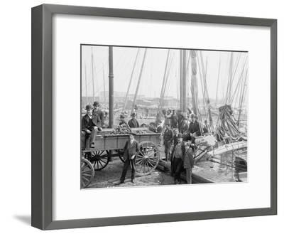 Unloading Oyster Luggers, Baltimore, Maryland, 1905--Framed Photographic Print