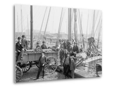Unloading Oyster Luggers, Baltimore, Maryland, 1905--Metal Print