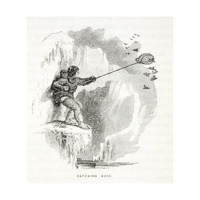 Catching Auks-Elisha Kane-Framed Giclee Print