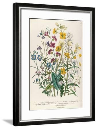 Forget-Me-Nots and Buttercups, Plate 13 from 'The Ladies' Flower Garden', Published 1842-Jane W^ Loudon-Framed Giclee Print