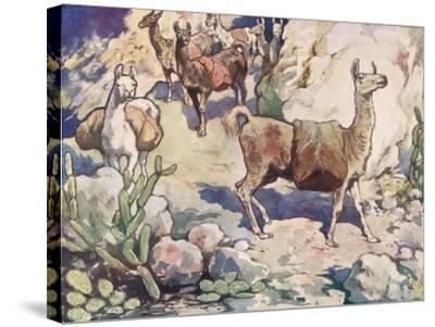 Alpacas on a Mountain Path-John Edwin Noble-Stretched Canvas Print