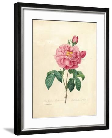 The Duchess of Orleans Rose-Pierre-Joseph Redout?-Framed Giclee Print