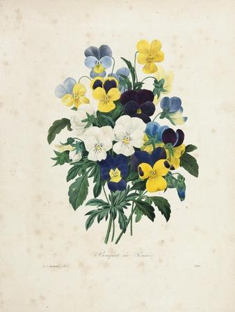 Bouquet of Pansies-Pierre-Joseph Redout?-Framed Giclee Print