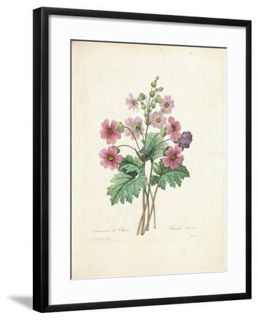 Chinese Primrose-Pierre-Joseph Redout?-Framed Giclee Print