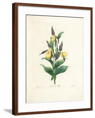 Sabot Des Alpes-Pierre-Joseph Redout?-Framed Giclee Print