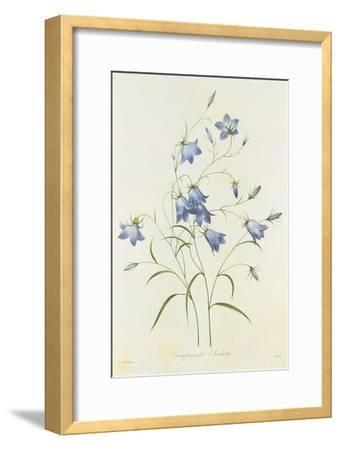 Campanula, from 'Choix Des Plus Belles Fleurs', 1827-33-Pierre-Joseph Redout?-Framed Giclee Print