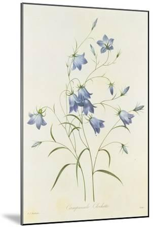 Campanula, from 'Choix Des Plus Belles Fleurs', 1827-33-Pierre-Joseph Redout?-Mounted Giclee Print