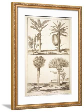 Plate Showing Palm Tree Types: Dragon's Blood--Framed Giclee Print
