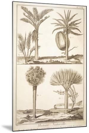 Plate Showing Palm Tree Types: Dragon's Blood--Mounted Giclee Print