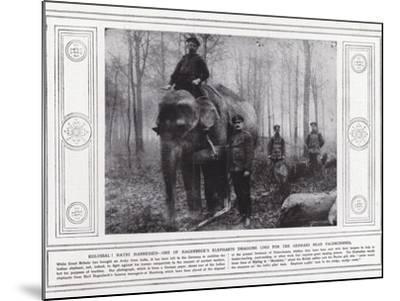 Kolossal! Hathi Harnessed--Mounted Photographic Print