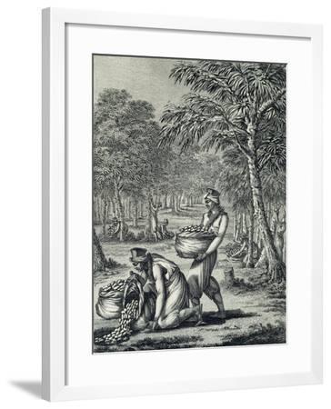 Rubber Harvesting--Framed Giclee Print