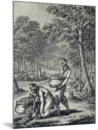 Rubber Harvesting--Mounted Giclee Print