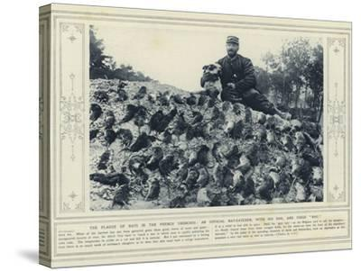 The Plague of Rats in the French Trenches, an Official Rat-Catcher, with His Dog, and their Bag--Stretched Canvas Print