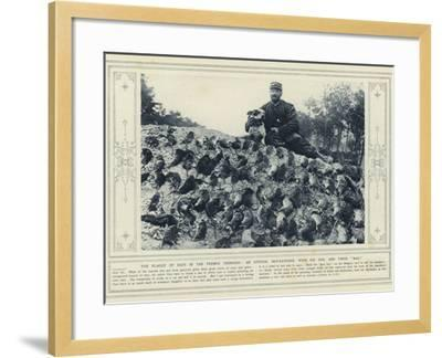 The Plague of Rats in the French Trenches, an Official Rat-Catcher, with His Dog, and their Bag--Framed Photographic Print