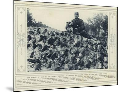 The Plague of Rats in the French Trenches, an Official Rat-Catcher, with His Dog, and their Bag--Mounted Photographic Print
