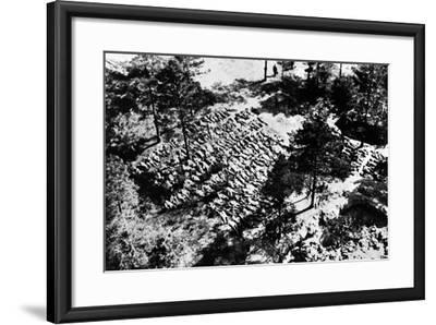Aerial Photograph of Excavated Bodies from the Mass Graves in Katyn Forest, 1943--Framed Photographic Print